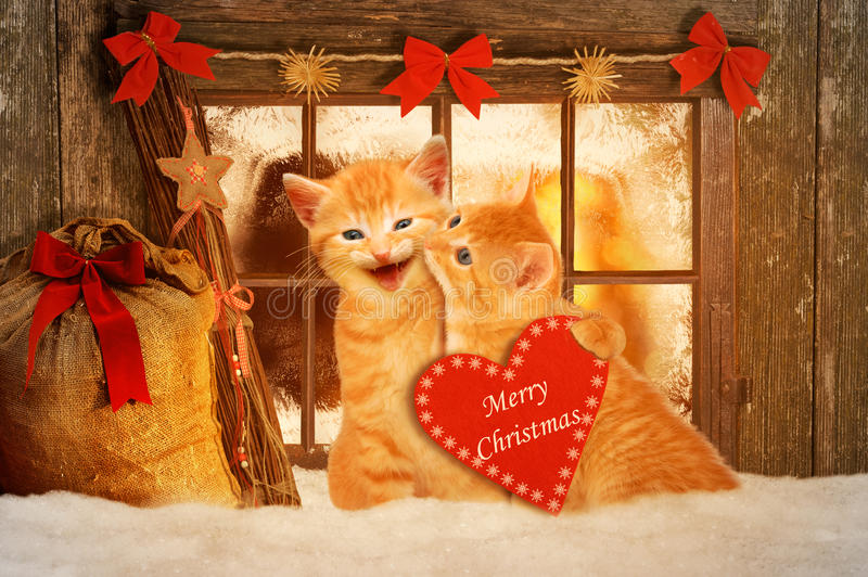Two cats at Christmas sitting in front of a Fesnter in the snow. And holding a red heart stock photo