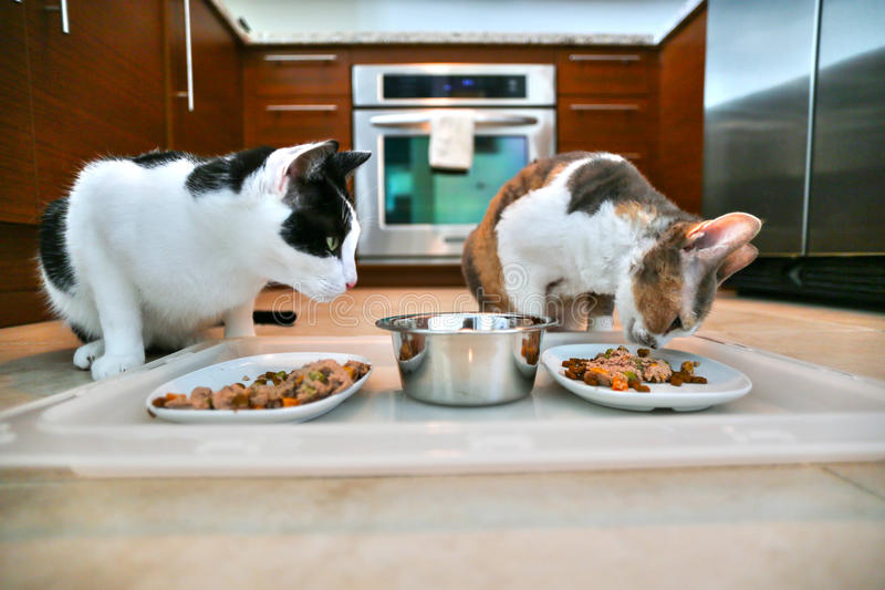 Two cats eating dinner stock photos