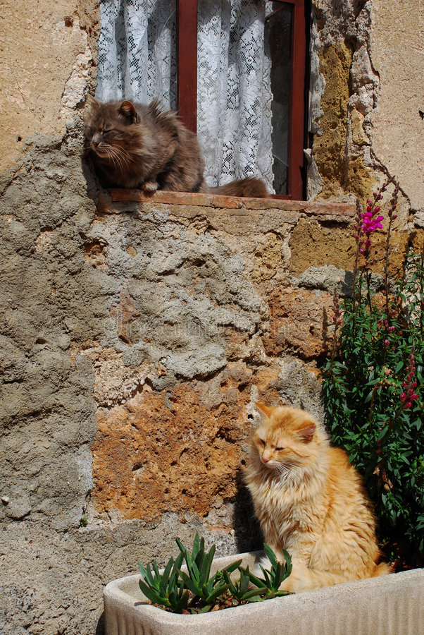 Two Cats Enjoying Sunshine. Two cats sit outside their house enjoying the spring sunshine, Tuscany, Italy royalty free stock photos