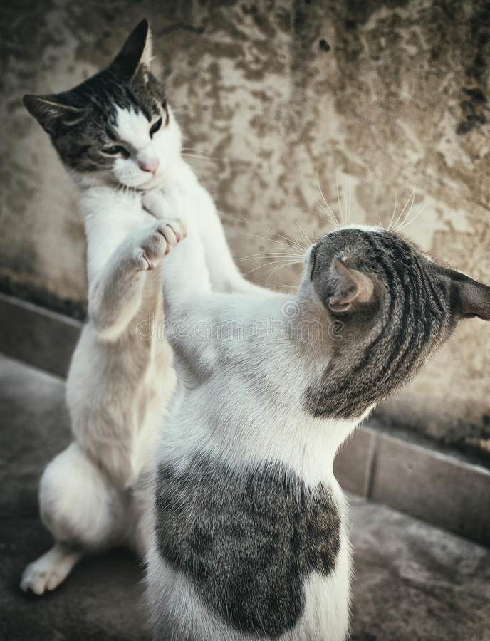 Two cats. royalty free stock photography