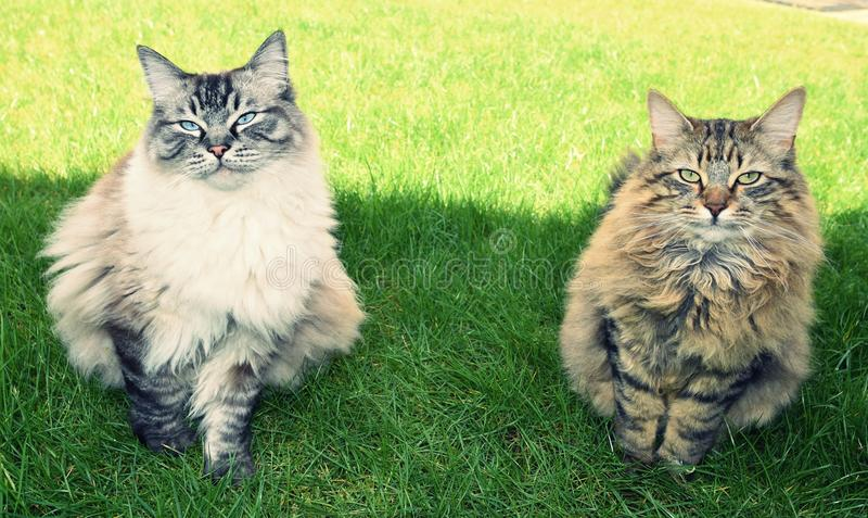 TWO CATS FIND SHADE FROM THE SUN stock photos
