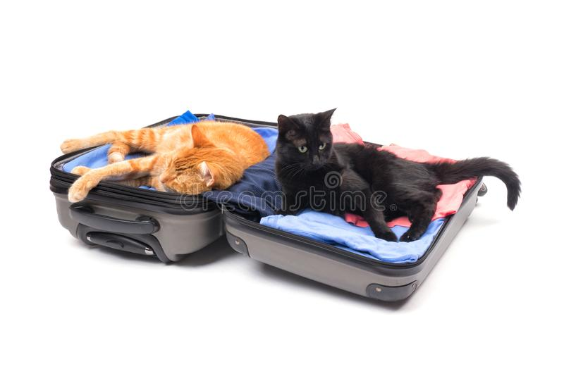 Two cats getting comfortable in an open, packed up luggage stock photography