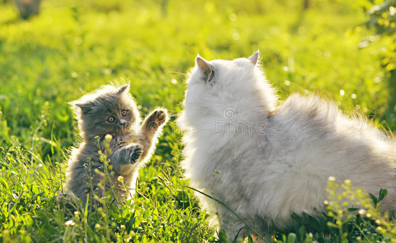Two cats on the grass stock photos