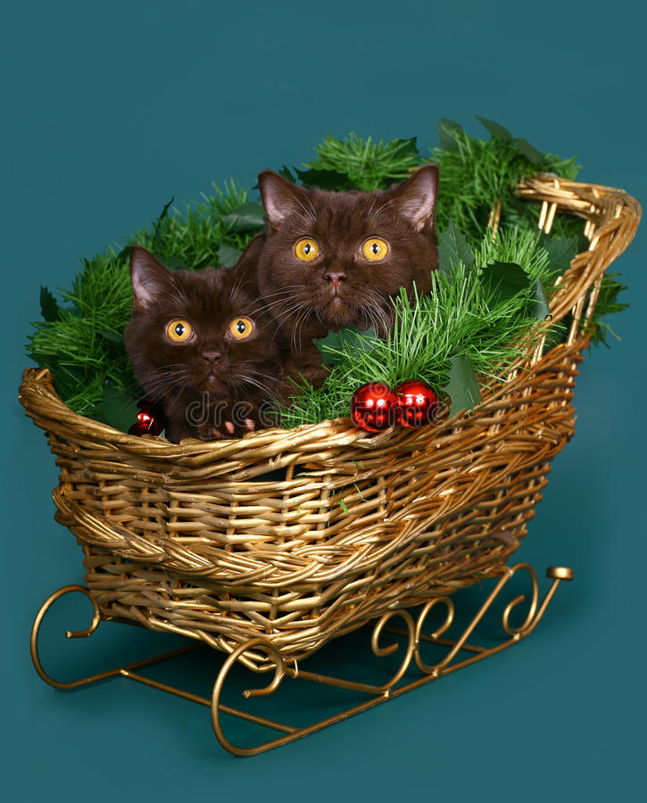 Free Two Cats In A Christmas Sleigh. Stock Images - 21654384