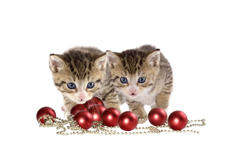 Two cats, kitten christmas. On white background royalty free stock images