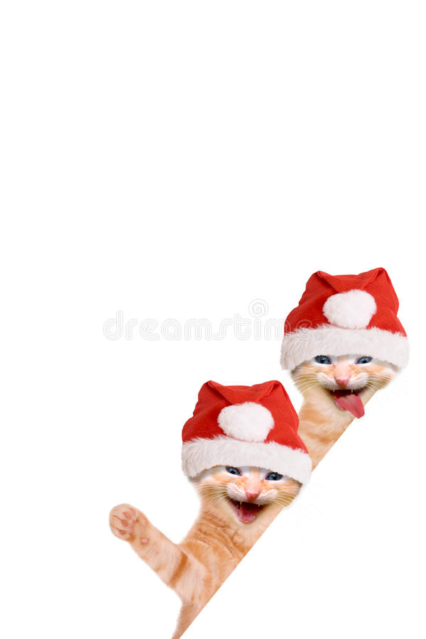 Two cats, laughing and waving with christmas hat. Isolated on white background royalty free stock photography