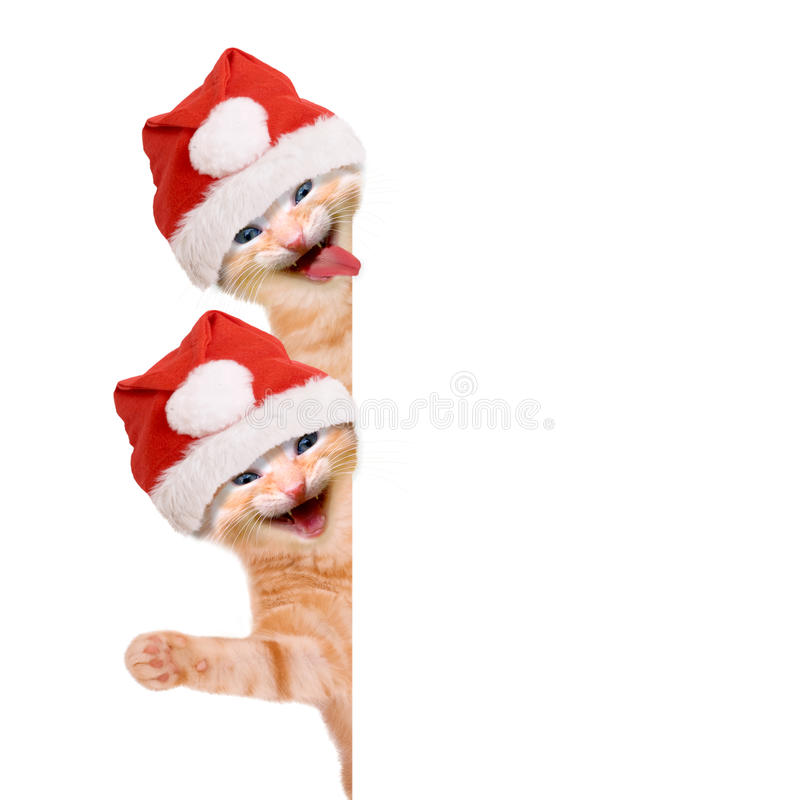 Two cats, laughing and waving with christmas hat. Isolated on white background stock photos