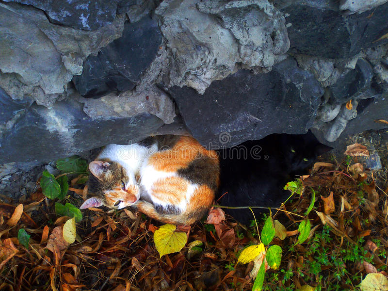 Two cats lie backs to each other royalty free stock images