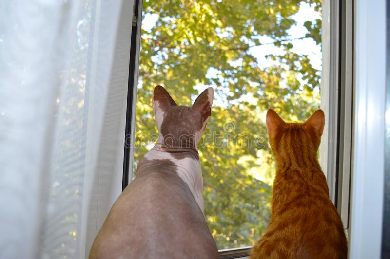 Two cats look out the window. Two cats peeking out the window on the background of a tree royalty free stock photo
