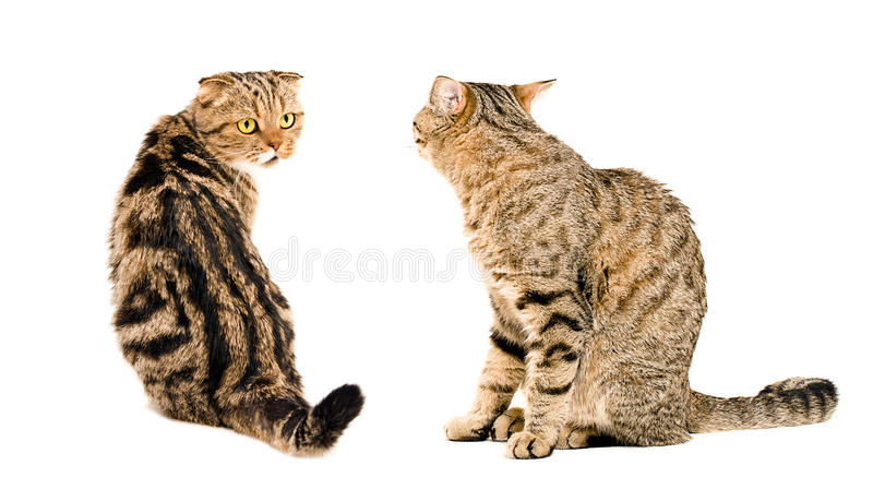 Two cats, looking at each other royalty free stock photo