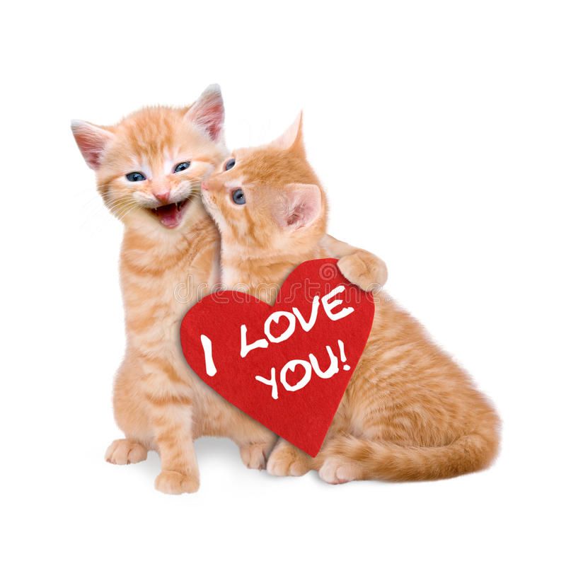 Two cats in love. On white background royalty free stock photos
