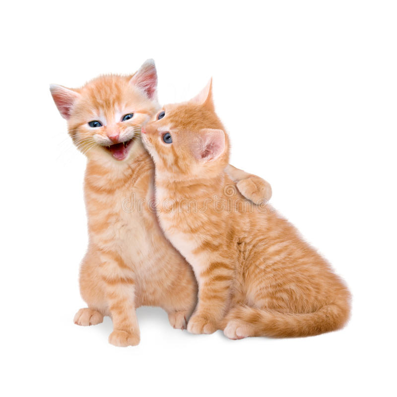 Two cats in love. On white background royalty free stock photo