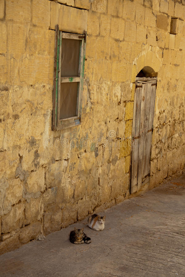 Two cats lying down in an alley. In Fontana, Gozo, Malta stock photo