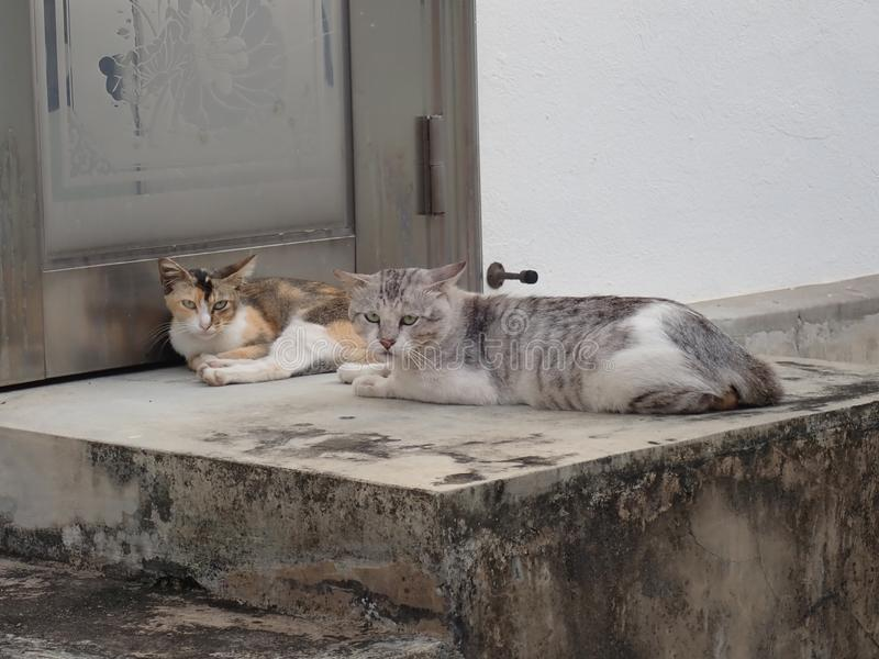 Two cats lying down in an alley. Two cats lying down on stairs in an alley. They gave the withering look once they realized I brought no food royalty free stock photo