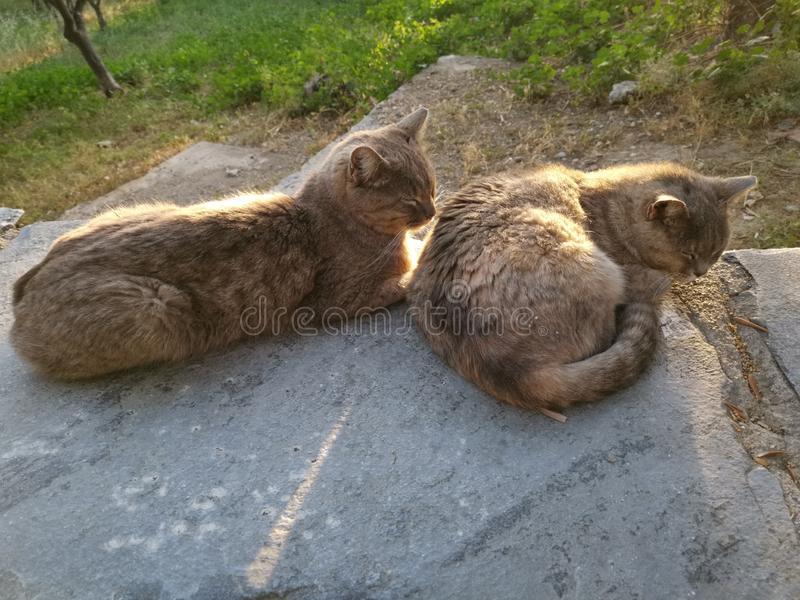 Two cats lying sleeping. Closing, eyes, lazy, couple, nap, afternoon, evening, sunset stock image