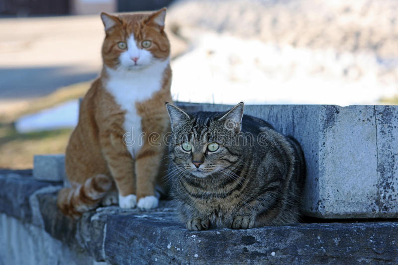Download Two cats stock photo. Image of adventurer, desire, brown - 33270080