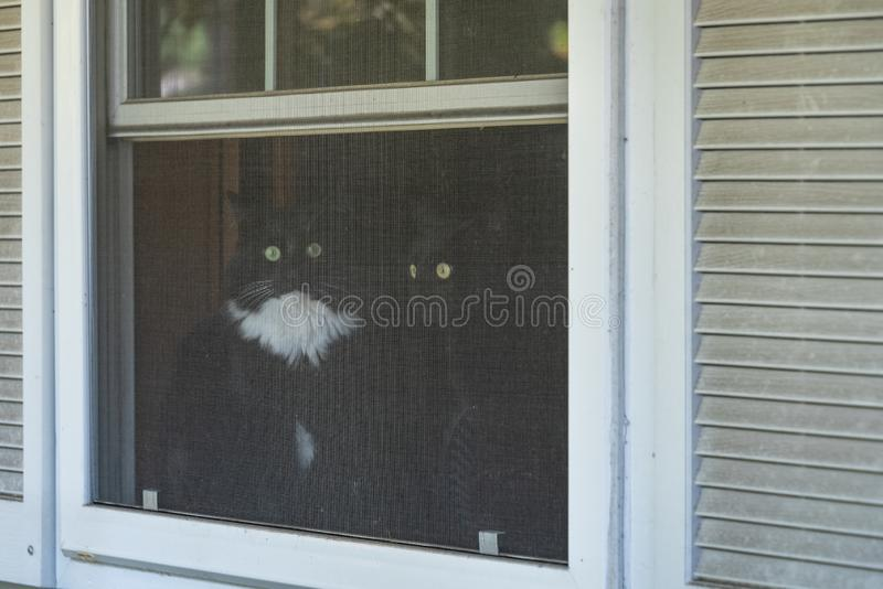 Two cats, one all black and one black and white tuxedo colored, sitting in a window looking out through the screen stock photography