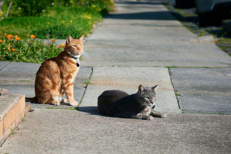 Two cats, one grey one, ginger red, friends sitting together on a footpath looking in the same direction. royalty free stock photo