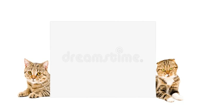 Two cats peeking from behind a placard stock photos