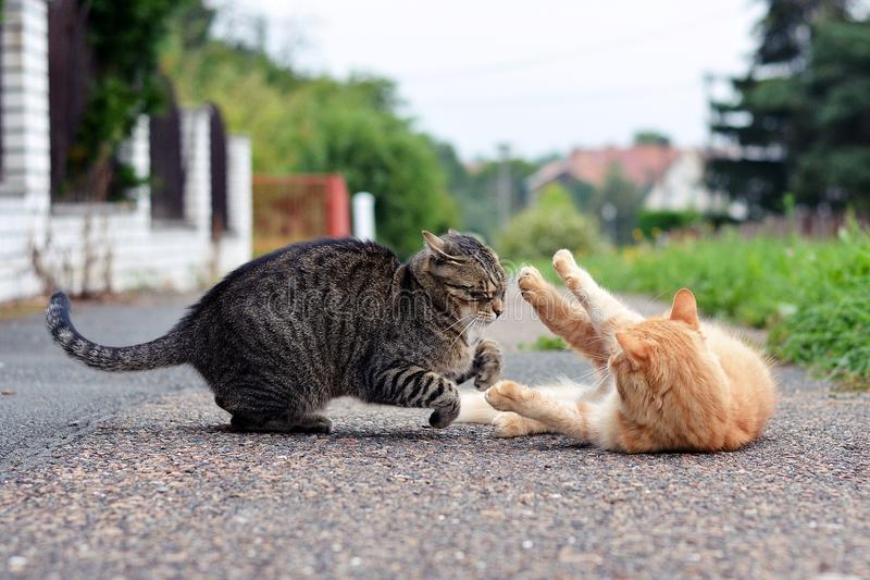 Two cats playing game royalty free stock photo