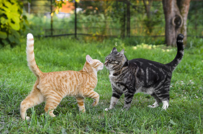 Cats Fighting Video Download