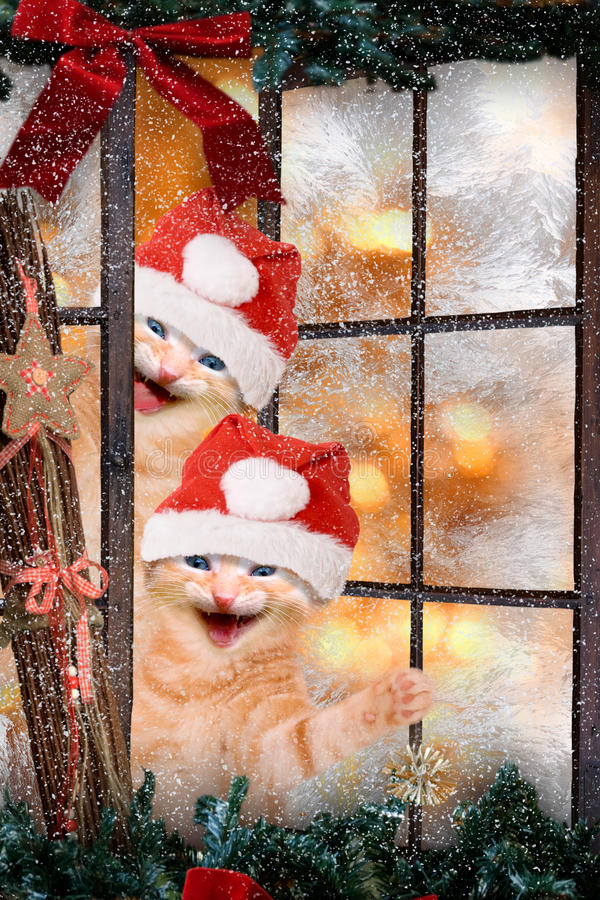 Two cats with Santa caps laughing. Look out a window stock photo