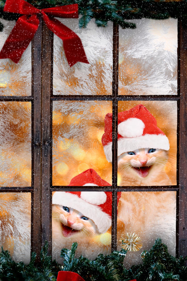 Two cats with Santa caps laughing. Look out a window royalty free stock images