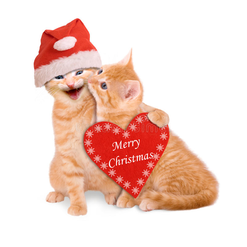 Two cats with Santa hat, wishing Merry Christmas isolated. On white background royalty free stock photography