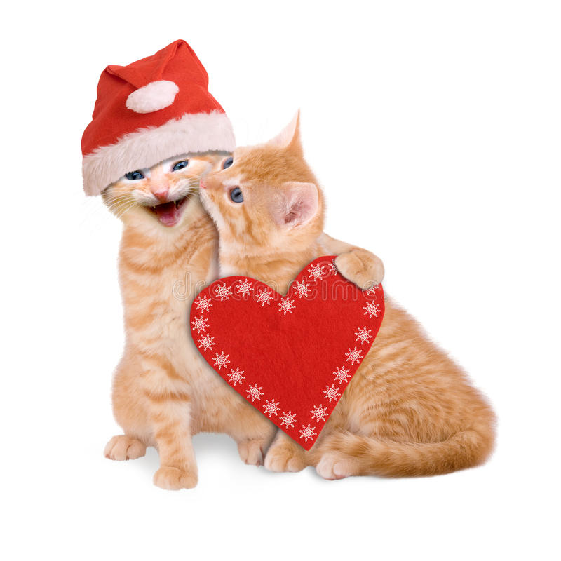 Two cats with Santa hat, wishing Merry Christmas isolated. On white background royalty free stock image