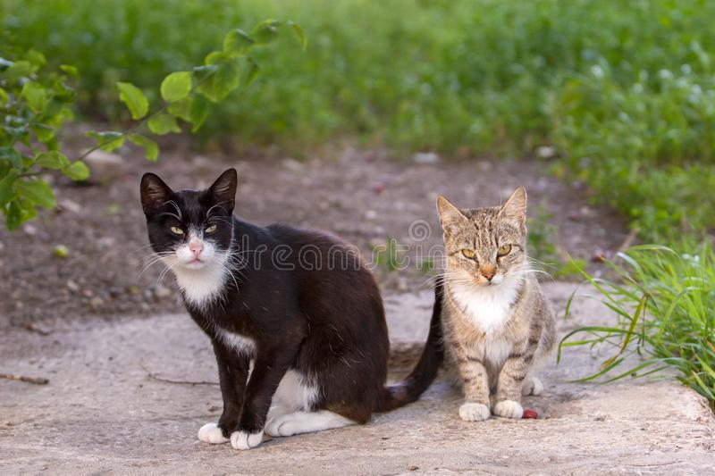 Two cats, serious black and gray, sit and look at the camera. royalty free stock photography