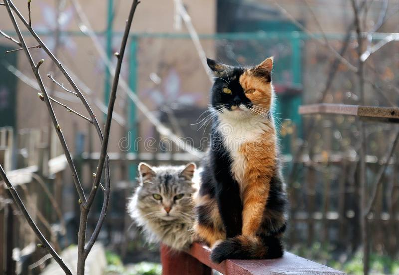 Two cats are sitting on the bench royalty free stock photography