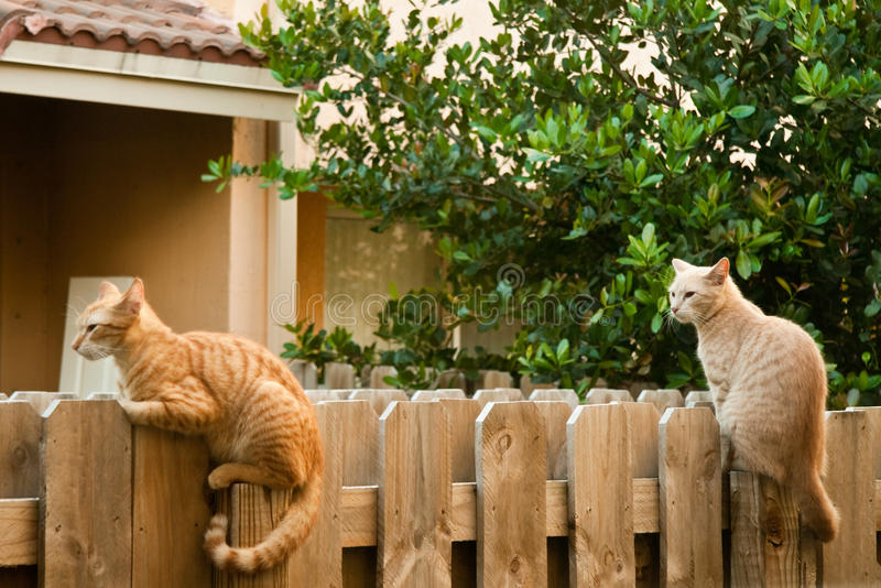 Cats on the fence. Two cats sitting on a wooden fence royalty free stock images