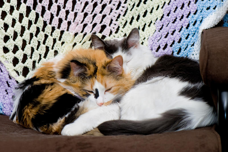 Download Two Cats Sleeping stock photo. Image of cuddle, chair - 17976906
