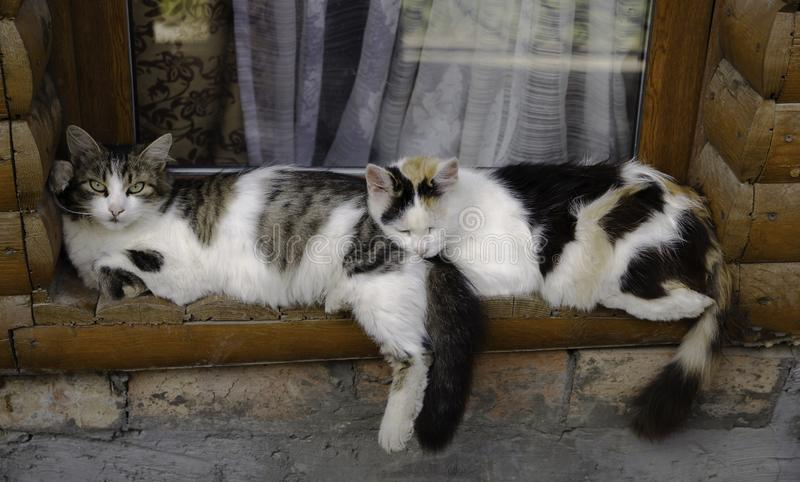 Two cats sleeping on the old wood window sill together stock image