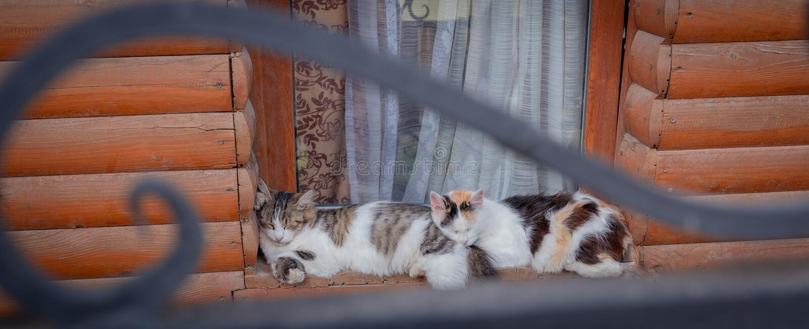 Two cats sleeping on the old wood window sill together stock photos