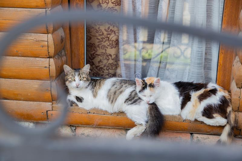 Two cats sleeping on the old wood window sill together stock images
