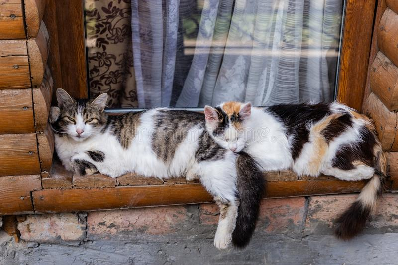 Two cats sleeping on the old wood window sill together royalty free stock photos