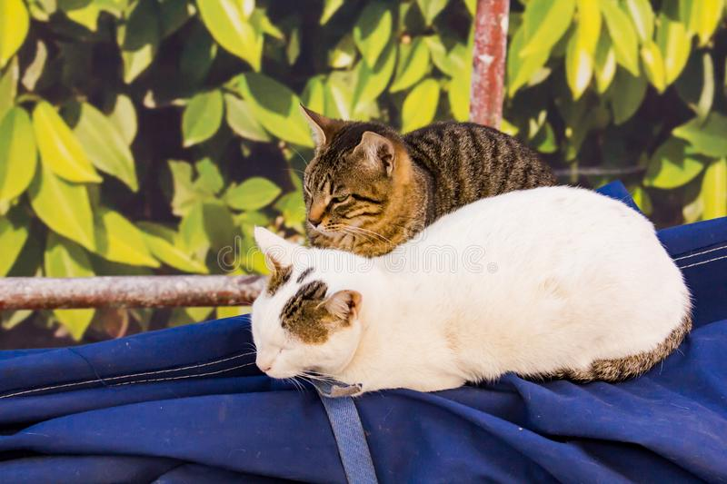 Two cats sleeping royalty free stock images