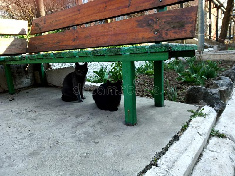 Two cats under the bench outdoor on street stock photos