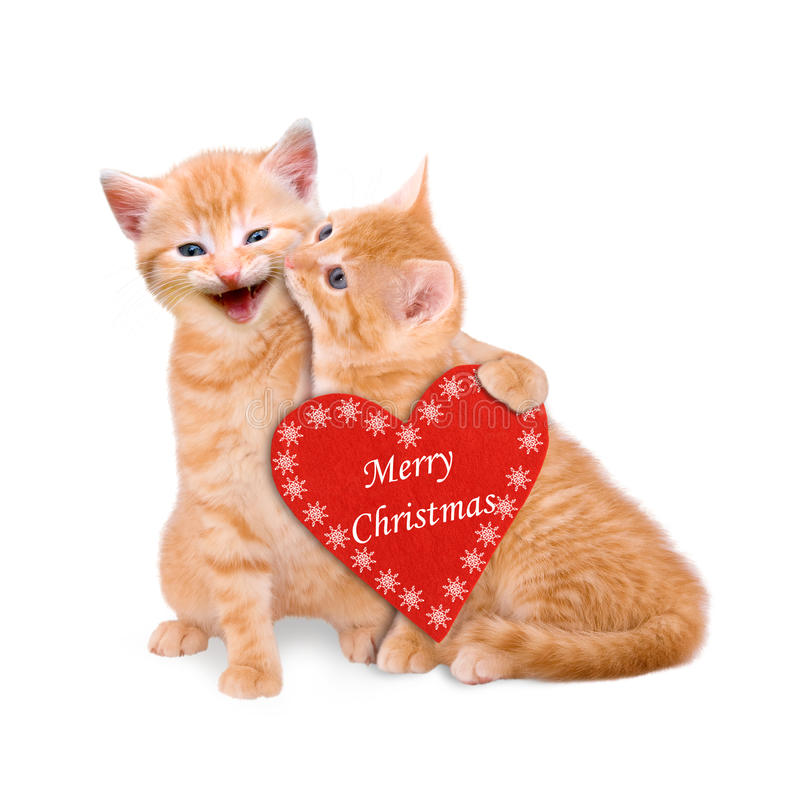 Two cats wishing Merry Christmas isolated. On white background stock image