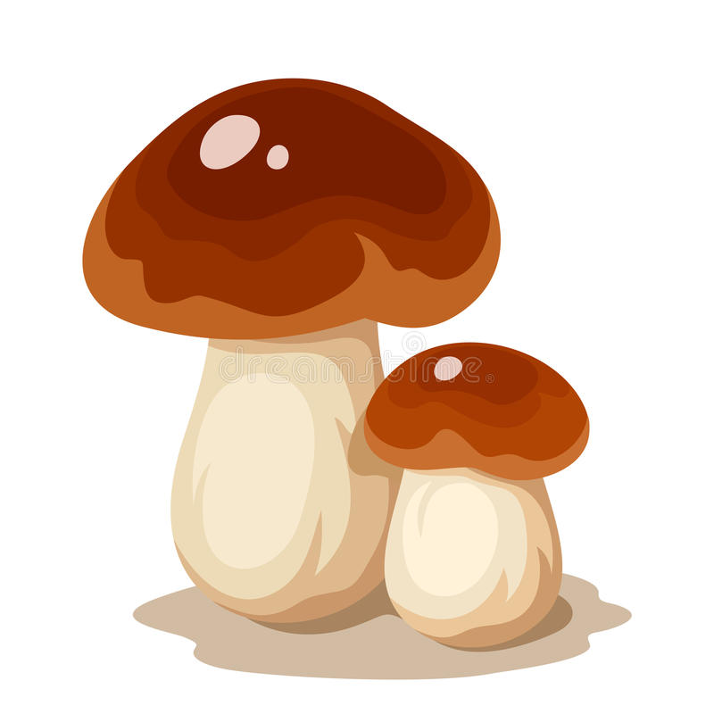 Two cep mushrooms. Vector illustration. Vector illustration of two cep mushrooms (porcini) isolated on a white background stock illustration