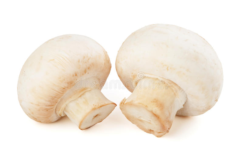 Two champignons. Isolated on white background stock photos