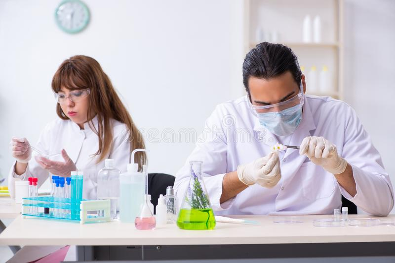 Two chemists working in the lab. The two chemists working in the lab stock images