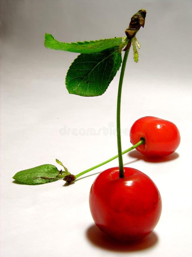 Two cherries stock photography
