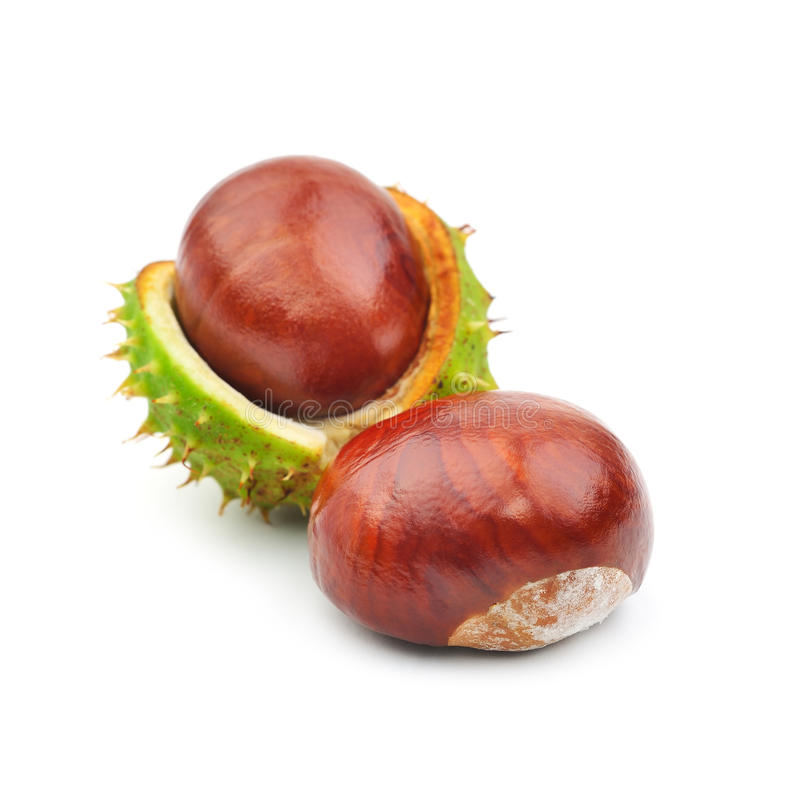 Download Two chestnuts and crust stock photo. Image of fall, prong - 33948264