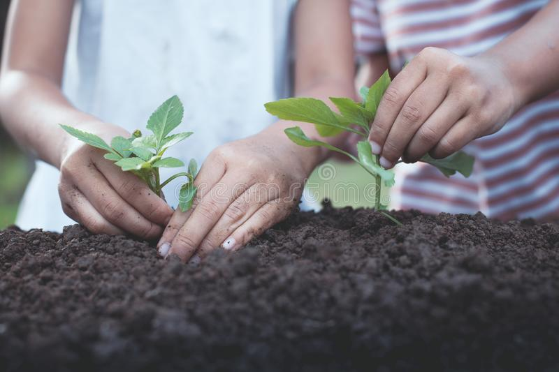 Two children little girl hand planting young tree on black soil. Together as save world concept in vintage color tone royalty free stock images