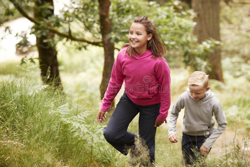 Two children walking through a forest amongst greenery, front view royalty free stock photography