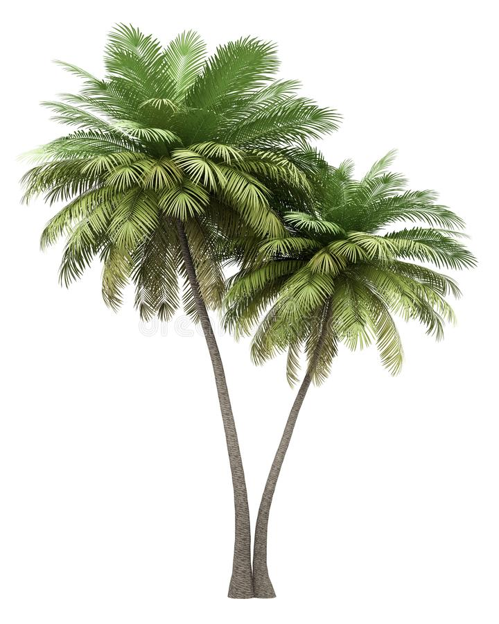 Two coconut palm trees isolated on white. Background royalty free illustration