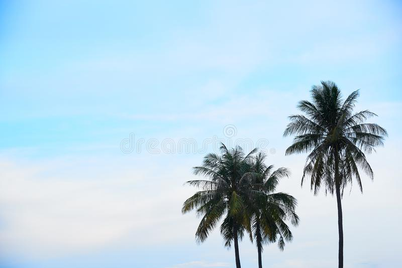 Three coconut trees and blue sky background stock photography
