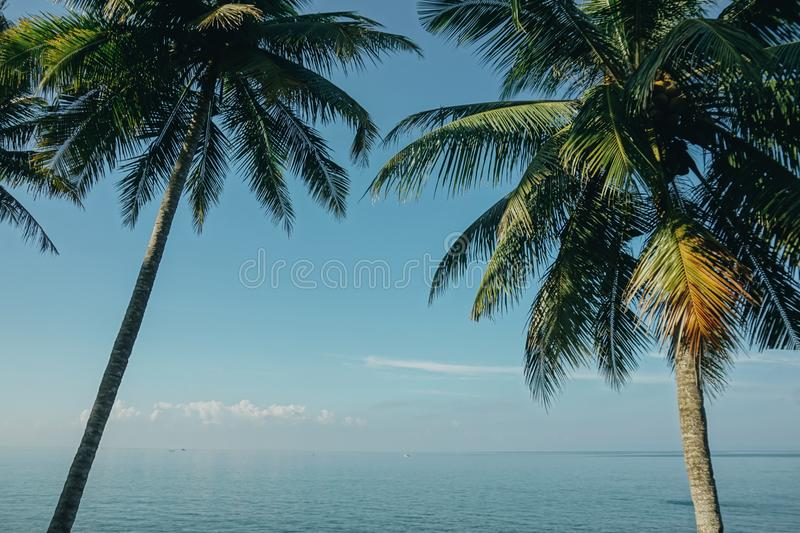 Two Coconut Trees Near Sea royalty free stock images